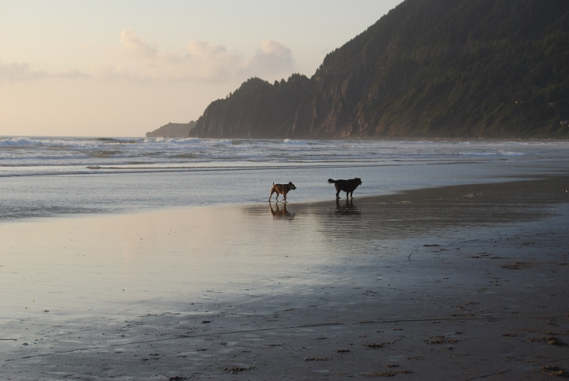 Pet Friendly Oregon Coast Beach