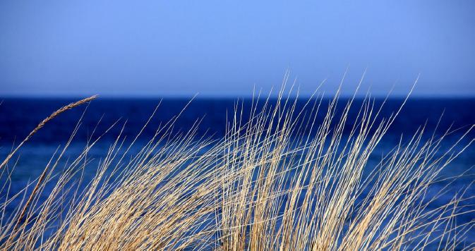 Manzanita Beach Grass Oregon Coast