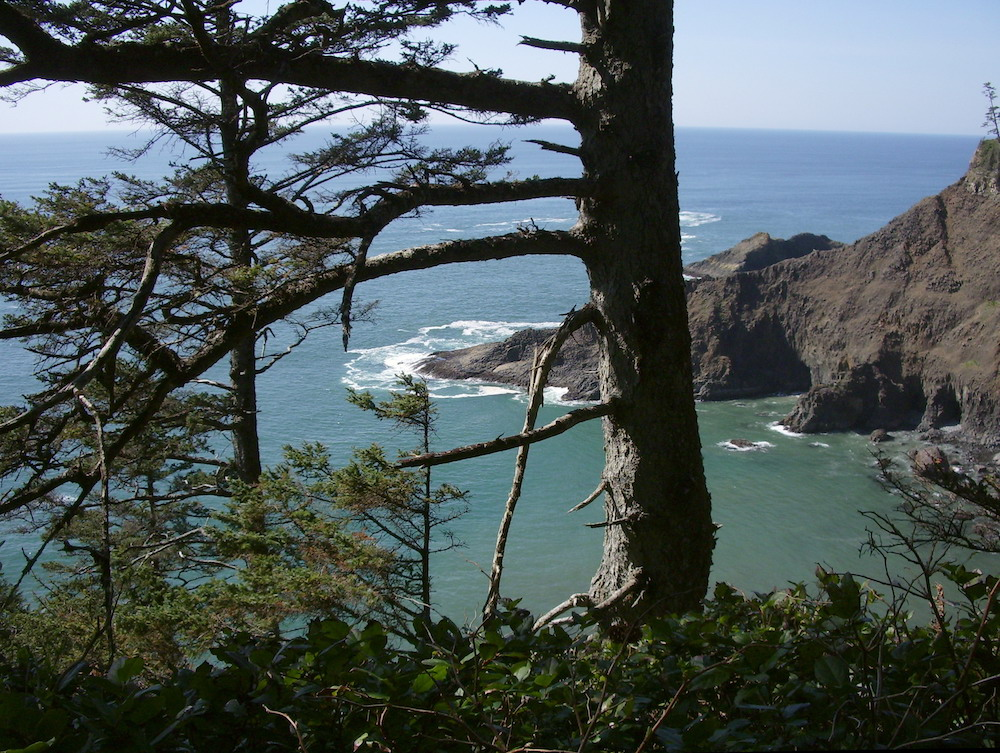 Cape Falcon Trail Oswald West State Park Oregon