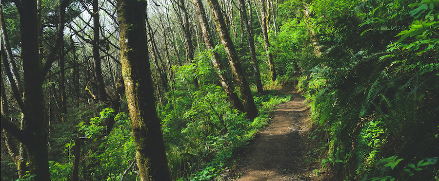 Oregon Coast Hikes & Trails